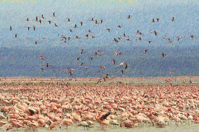 Flamingo Digital Art - Lesser Flamingo Flock At Lake Nakuru Kenya by Liz Leyden