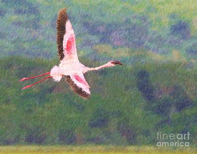 Flamingo Digital Art - Lesser Flamingo Phoenicopterus Minor Flying by Liz Leyden