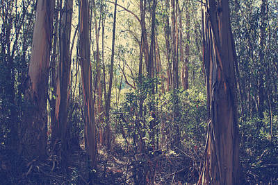 Eucalyptus Tree Photograph - Let Me Be Weightless by Laurie Search