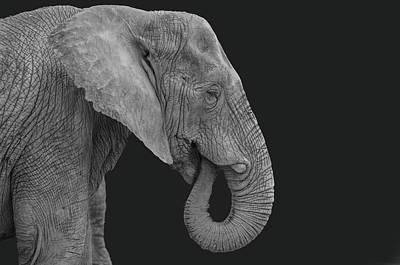 Elephant Photograph - Let Me Roam And Be Free by Kathy Schreiber-Castrataro