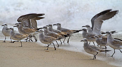 Seagull Photograph - Let's Blow This Joint by Betsy C Knapp