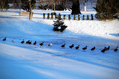Snow Photograph - Let's Go by Zinvolle Art