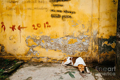 Letting Sleeping Dogs Lie Print by Dean Harte