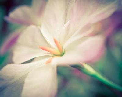 Horizontal Photograph - Leucocoryne 3 by Priya Ghose