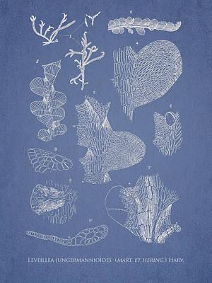 Alga Digital Art - Leveillea Jungermannioides by Aged Pixel