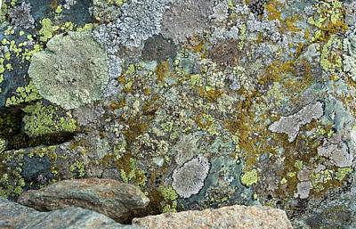Lichens On A Rock Print by Bob Gibbons