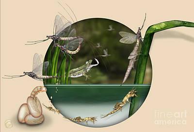 Trout Painting - Life Cycle Of Mayfly Ephemera Danica - Mouche De Mai - Zyklus Eintagsfliege - Stock Illustration - Stock Image by Urft Valley Art