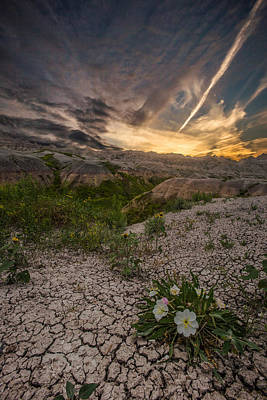 Badlands Photograph - Life Finds A Way by Aaron J Groen