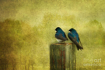 Swallow Photograph - Life Long Friends by Beve Brown-Clark Photography