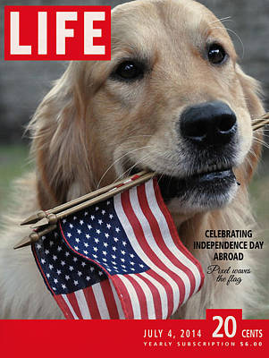 Retrievers Digital Art - Life Magazine Independence Day 4 July 2014 by Nop Briex