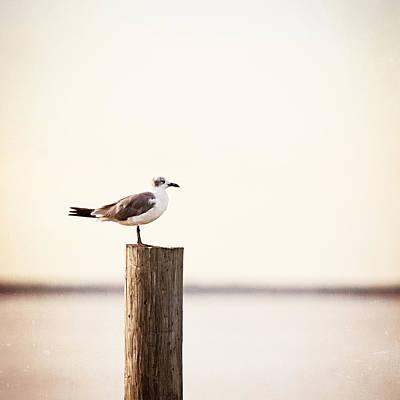 Beach Photograph - Life On The Bay by Carolyn Cochrane
