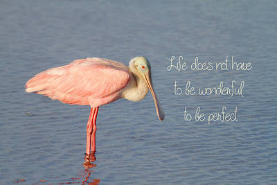 Spoonbill Photograph - Life Wonderful And Perfect by Kim Hojnacki