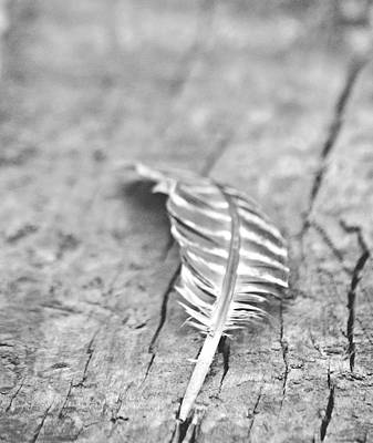 A Summer Evening Photograph - Light As A Feather by Chastity Hoff