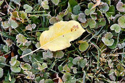 Light Autumn Frost - Kittitas County - Washington - October 2013 Print by Steve G Bisig