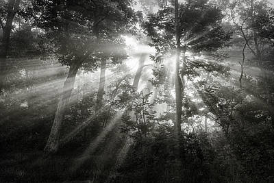 Sunlight Photograph - Light In The Darkness by Andrew Soundarajan