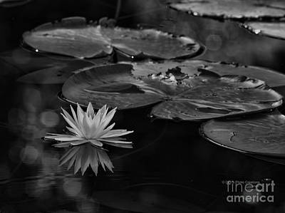 Lilly Pads Photograph - Light In The Darkness by Deborah Benoit