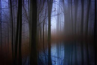 Light In The Woods Print by Ron Jones