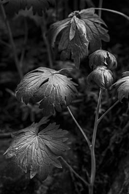 Light On The Leaf Print by Jon Glaser