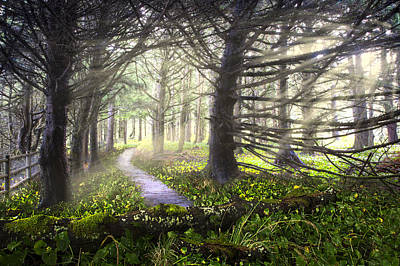 Light On The Trail Print by Debra and Dave Vanderlaan