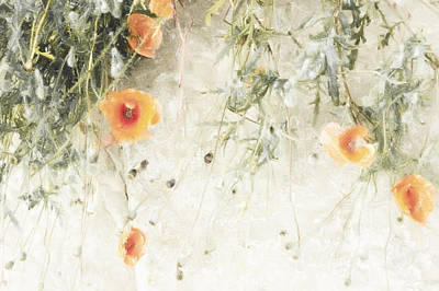 Light Poppies  Print by Scarlet  James