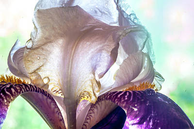 Light Within 2. Macro Iris Series Print by Jenny Rainbow