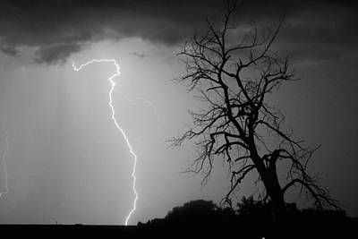 Lightning Tree Silhouette Black And White Print by James BO  Insogna