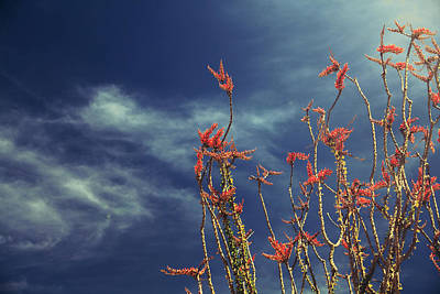 Joshua Tree Photograph - Like Flying Amongst The Clouds by Laurie Search