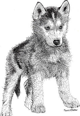 Siberian Husky Drawing - Lil Husky by Terri Pfister