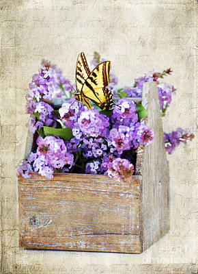 Swallow Photograph - Lilacs And The Butterfly by Darren Fisher