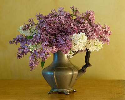 Lilacs In A Pewter Jug Print by Ness Welham