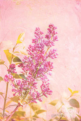 Lilacs Photograph - Lilacs In Pink by Kay Pickens