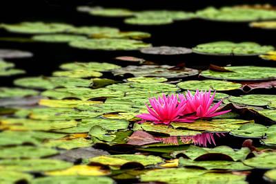 Lilies On Lake Hope Print by Dick Wood
