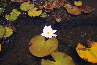 All Around Us Photograph - Lilies Shall Remain by Raven Lynch