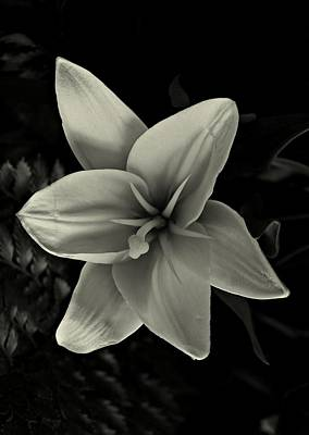 Cabin Wall Photograph - Lilly In Black And White by David Dehner