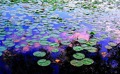 Lilly Pad Sunset Print by Wendell Lowe