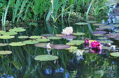 Lilly Pond At Mission San Juan Capistrano Print by Debby Pueschel