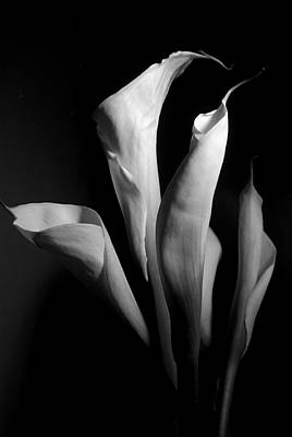 Plants Photograph - Lily 4 by Joe Kozlowski