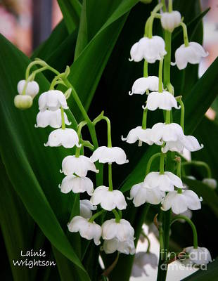 Lily Of The Valley Print by Lainie Wrightson