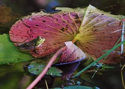 Joy Dinardo Bradley Dinardo Designs Photograph - Lily Pad Beauty by Joy Bradley