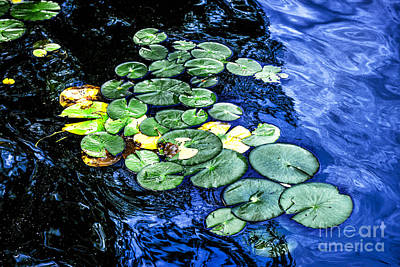 Monet Photograph - Lily Pads by Elena Elisseeva
