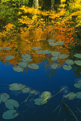 Lily Pads In Autumn Print by Bruce Thompson