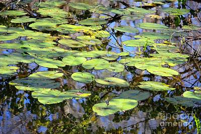 Lilies Photograph - Lily Pads In The Swamp by Carol Groenen