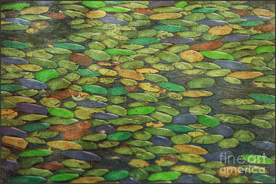 Lily Pads Print by Tom York Images