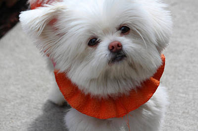 Warm Fuzzy Puppy Photograph - Lily by  The Art Of Marilyn Ridoutt-Greene