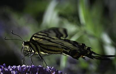 Abstract Image Of A Butterfly Photograph - Linear by Rae Ann  M Garrett