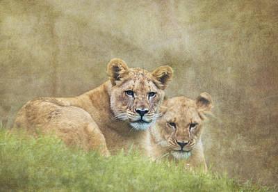 Lion Photograph - Lion Cubs by Angie Vogel