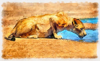 Lioness Drinking Print by George Rossidis