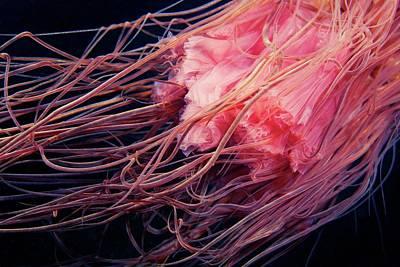Lion's Mane Jellyfish Tentacles Print by Alexander Semenov