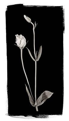 Flower Photograph - Lisianthus Buds by Patrick Chuprina