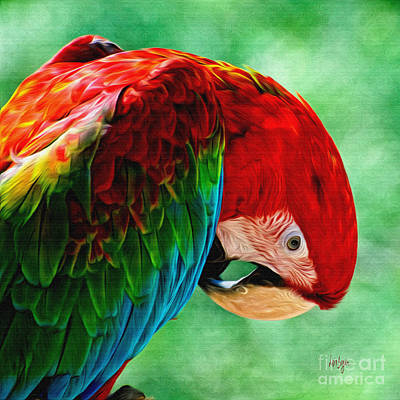 Macaw Digital Art - Listen To Your Heart by Lois Bryan
